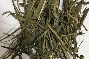 Centotheca Lappacea Extract